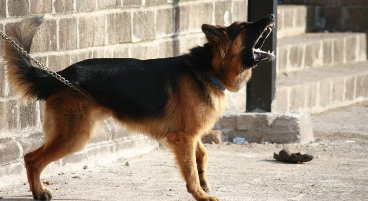 obroża przeciw szczekaniu dla psa