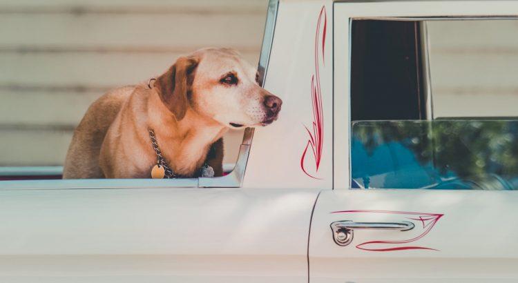 podróż z psem może być udana